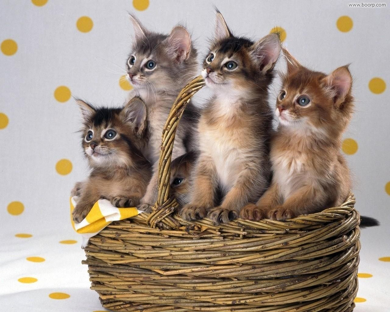 Sfondi desktop animali for Gatti sfondi desktop gratis